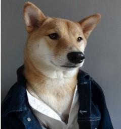 o-tumblr-mensweardog-publica-imagens-de-um-cachorro-vestido-como-homem-de-verdade-incluindo-acessorios-como-jaquetas-gravatas-bonitas-e-ate-roupa-social-seja-descola-ou-mais-certinho